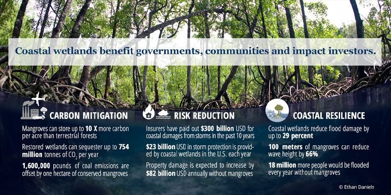 Fact Sheet: Blue Carbon Credits