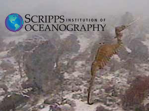 News Release + Video: Scientist Discover Ruby Seadragon