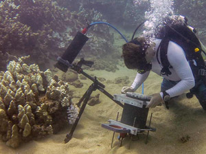 News Release + Video: Coral Reef Microscope