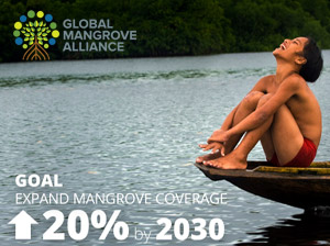 Fundraising Proposal: Global Mangrove Alliance